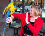 Nelson, the blue tailed Australian macaw drops by for a chat