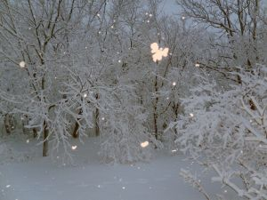 snow angel joey
