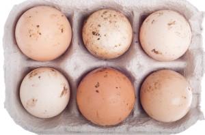 dirty-eggs