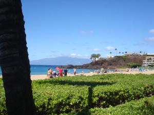Ocean Girl shrubs