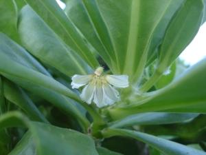 Ocean girl's half flower***************